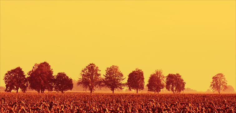 Landschaft-10